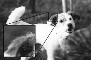 Es wird ein analoges Foto von einem Hund gezeigt, der mit einem ISO Wert von 400 aufgenommen wurde, um die Körnung im Bild zu verdeutlichen.