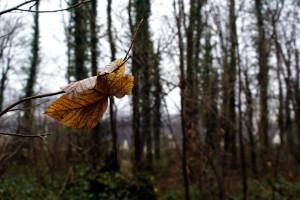 Die zweite Herbstfotografie - ein Blatt hängt schlaff von einem Ast am linken Bildrand. Es weist bereits eine geblich-bräunliche Färbung auf.