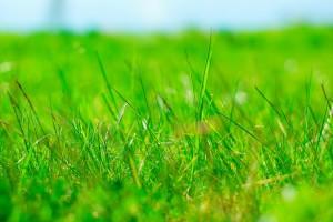 Gras am Ufer der Seseke in stark gesättigten Farben