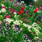 Hyde Park Blumen