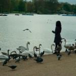 Frau füttert Vögel Hyde Park